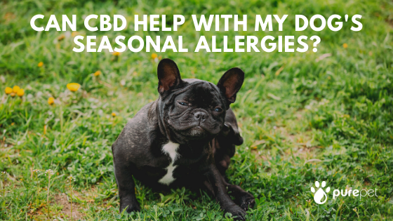 cbd dog seasonal allergies