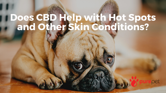 cbd hot spots skin conditions