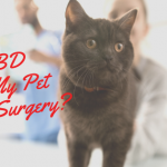 cbd pet post surgery