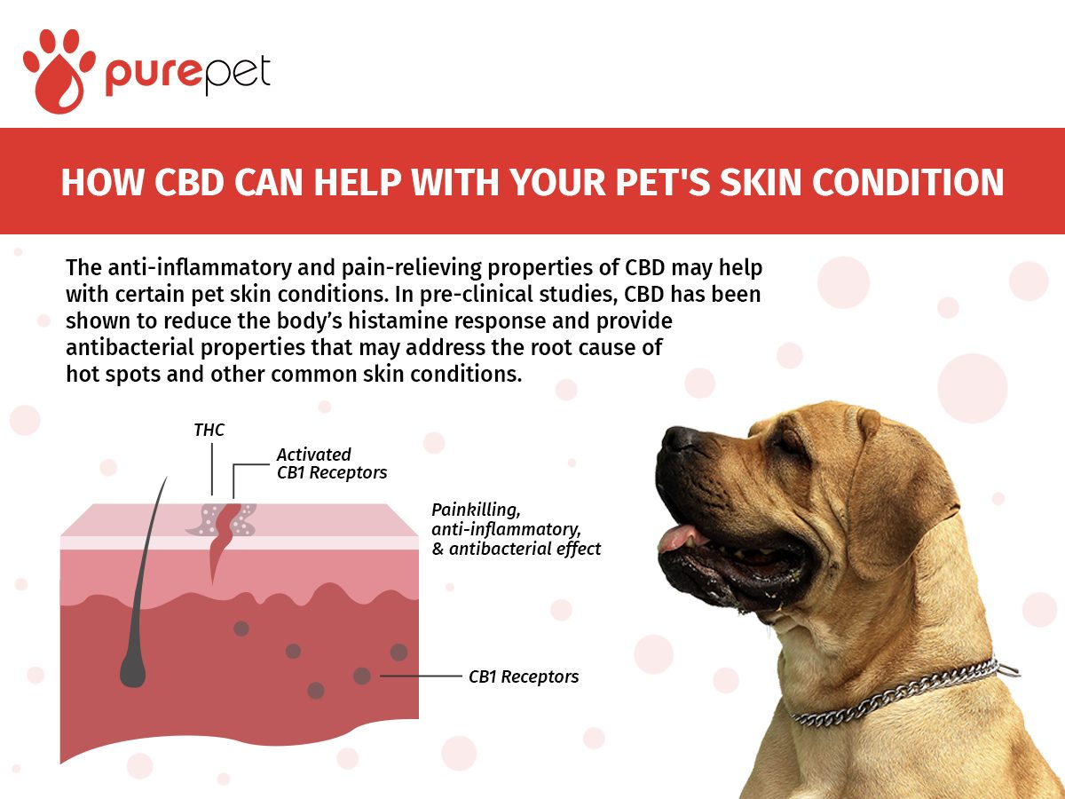 cbd pet skin conditions