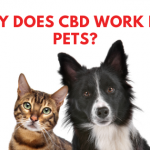 why does cbd work for pets