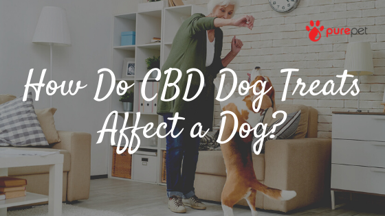 cbd dog treats affect dog