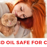 cbd oil safe for cats