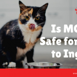 mct oil safe cats ingest