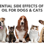 side effects cbd oil dogs cats